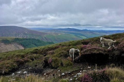 Wicklow Mountains 01   Ireland 2018   thefrozendivide