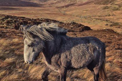 We Drift Like Worried Fires | Wild Horse Canvas Print | thefrozendivide