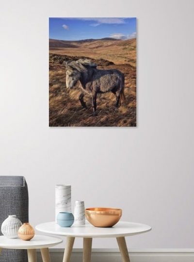 We Drift Like Worried Fires | Wild Horse Canvas Print | thefrozendivide A