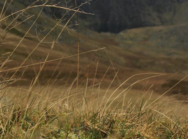 Dulyn Bothy Hiking Loop
