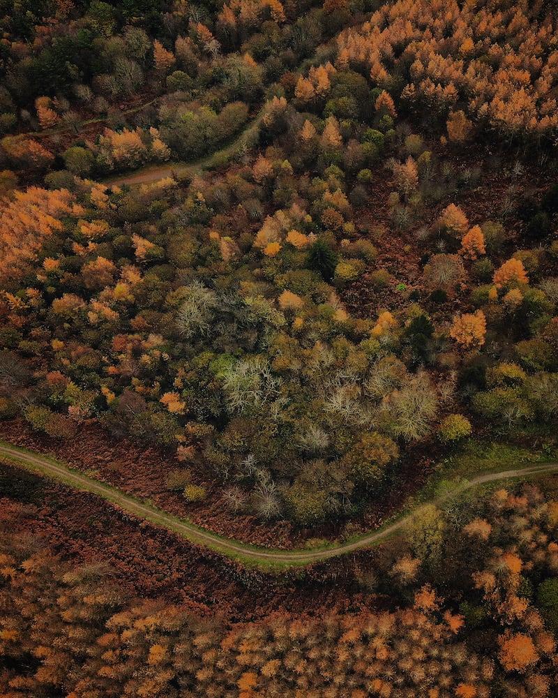 Coed Llangwyfan Forest Aerial Photo | The Frozen Divide